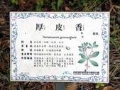 2018 04:厚皮香01 台中市西屯區都會園路台中都會公園.JPG