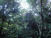 花蓮保育工作假期:DSC00817.JPG