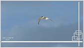 2014 鳥類:017.jpg