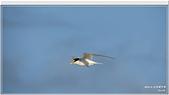 2014 鳥類:018.jpg