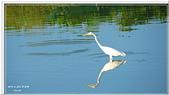 2014 鳥類:015.jpg