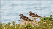 2014 鳥類:025.jpg