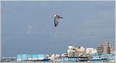 2014 鳥類:026.jpg