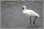 2017鳥類:3127.jpg