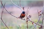 2017鳥類:3123.jpg