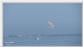 2014 鳥類:005.jpg