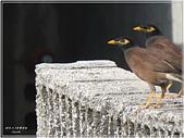 2014 鳥類:016.jpg