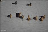 2017鳥類:3194.jpg