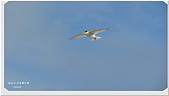2014 鳥類:019.jpg