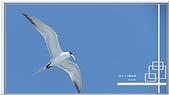 2014 鳥類:008.jpg