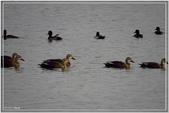 2017鳥類:3193.jpg
