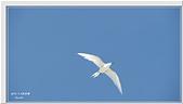 2014 鳥類:004.jpg