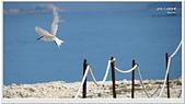 2014 鳥類:001.jpg