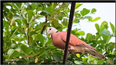 2014 鳥類:024.jpg