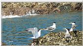2014 鳥類:007.jpg
