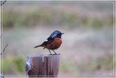 2017鳥類:3124.jpg