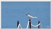 2014 鳥類:003.jpg