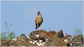 2014 鳥類:013.jpg