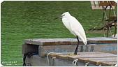 2014 鳥類:022.jpg