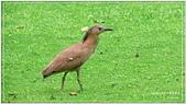 2014 鳥類:023.jpg
