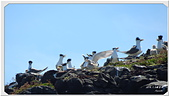 2014 鳥類:006.jpg