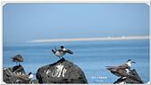 2014 鳥類:009.jpg