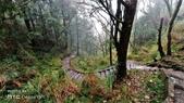 太平山山毛櫸步道:山毛櫸步道058-20201114.jpg