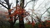 太平山山毛櫸步道:山毛櫸步道081-20201114.jpg