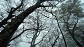 太平山山毛櫸步道:山毛櫸步道083-20201114.jpg