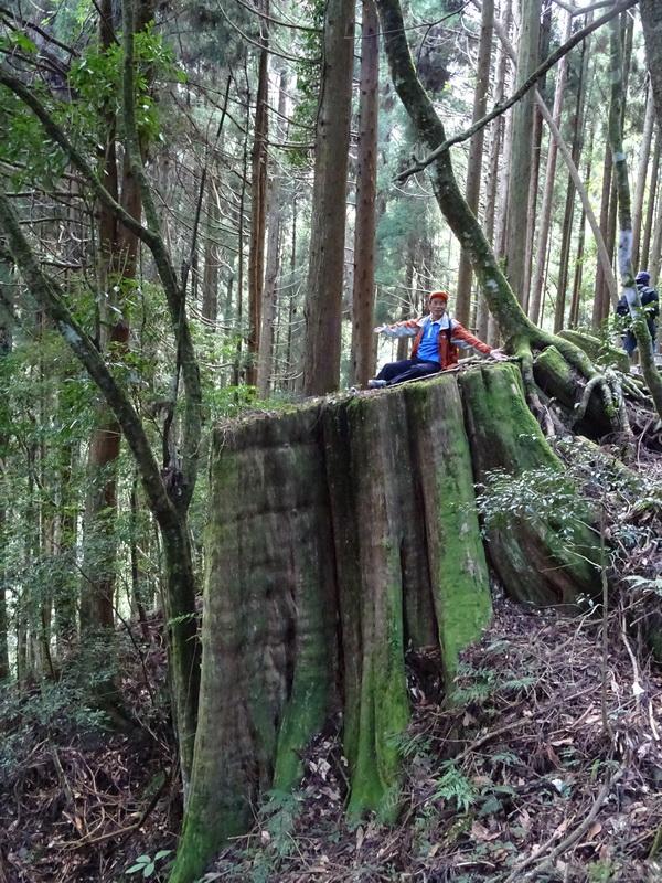 觀霧巨木步道:DSC02449.JPG