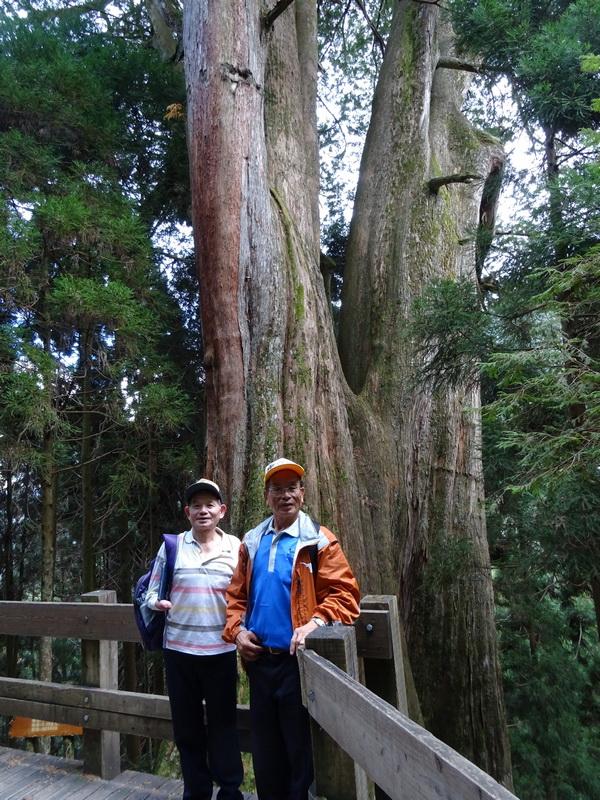 觀霧巨木步道:1-5.JPG
