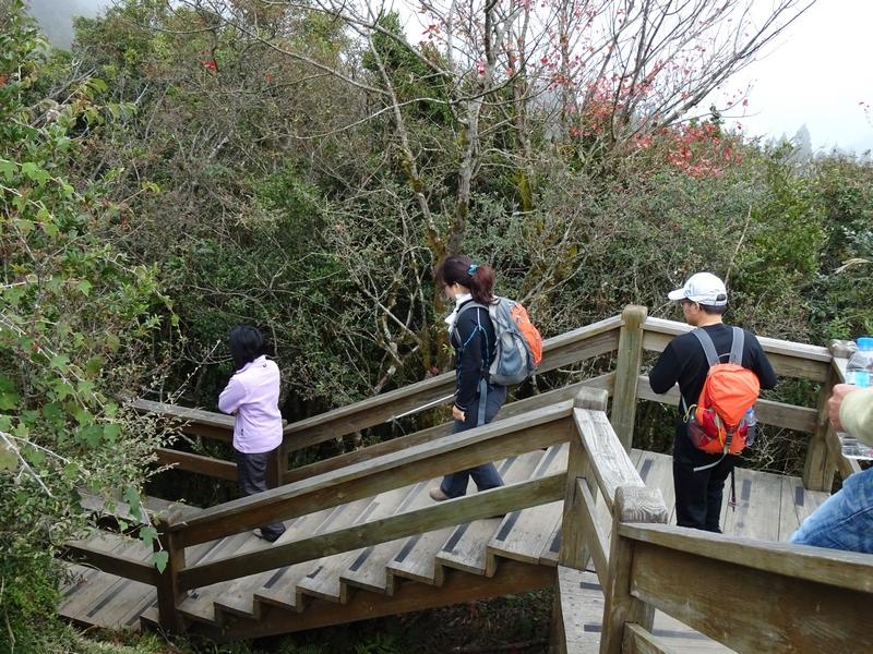觀霧巨木步道:DSC02355.JPG