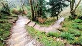 太平山山毛櫸步道:山毛櫸步道055-20201114.jpg