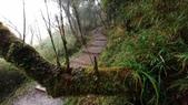 太平山山毛櫸步道:山毛櫸步道070-20201114.jpg