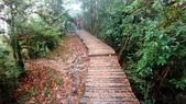 太平山山毛櫸步道:山毛櫸步道075-20201114.jpg