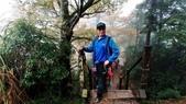 太平山山毛櫸步道:山毛櫸步道078-20201114.jpg