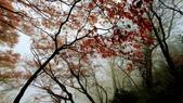太平山山毛櫸步道:山毛櫸步道080-20201114.jpg