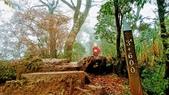 太平山山毛櫸步道:山毛櫸步道089-20201114.jpg