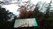 太平山山毛櫸步道:山毛櫸步道097-20201114.jpg