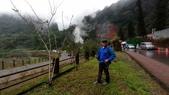 太平山山毛櫸步道:山毛櫸步道159-20201114.jpg