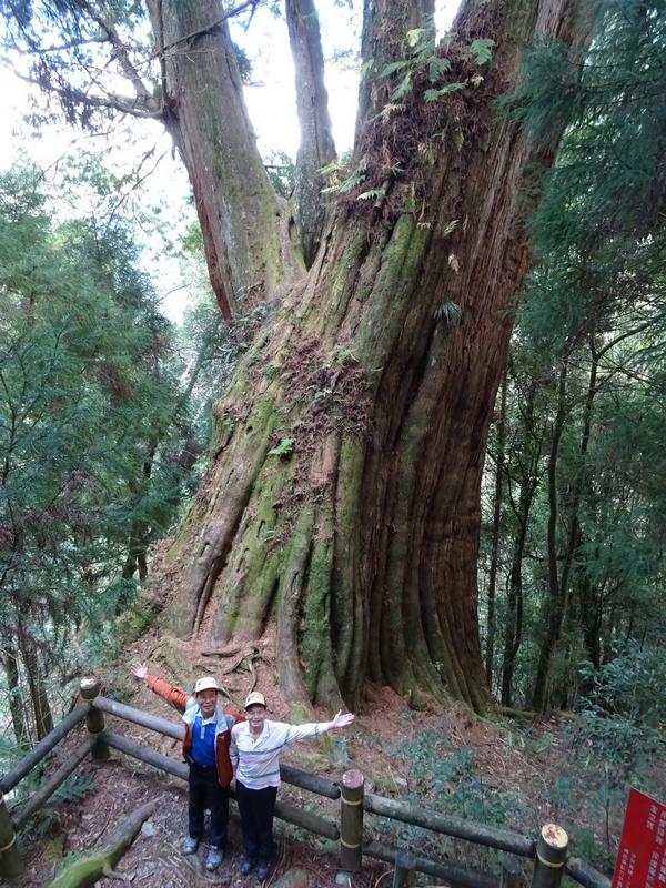 觀霧巨木步道:2-6.JPG