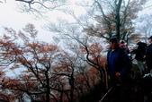 太平山山毛櫸步道:山毛櫸步道102-20201114.jpg
