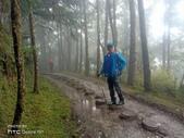 太平山山毛櫸步道:山毛櫸步道020-20201114.jpg