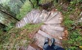 太平山山毛櫸步道:山毛櫸步道061-20201114.jpg