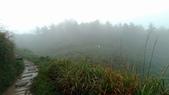 太平山山毛櫸步道:山毛櫸步道065-20201114.jpg