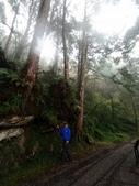 太平山山毛櫸步道:山毛櫸步道134-20201114.jpg