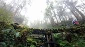 太平山山毛櫸步道:山毛櫸步道139-20201114.jpg
