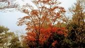 太平山山毛櫸步道:山毛櫸步道095-20201114.jpg