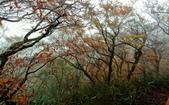 太平山山毛櫸步道:山毛櫸步道100-20201114.jpg