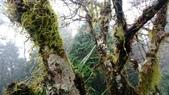 太平山山毛櫸步道:山毛櫸步道145-20201114.jpg